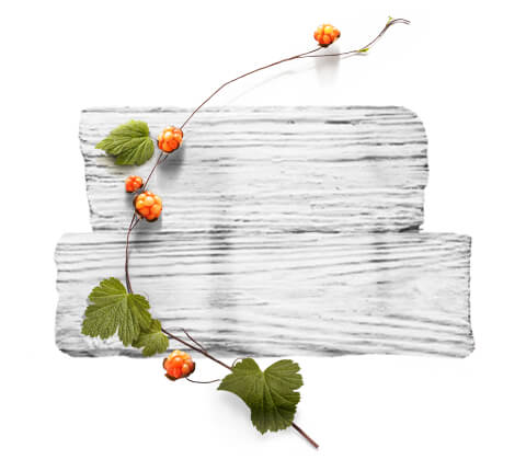 barnangen_de_products_nordic_care_range_ingredients_cloudberry_480x430